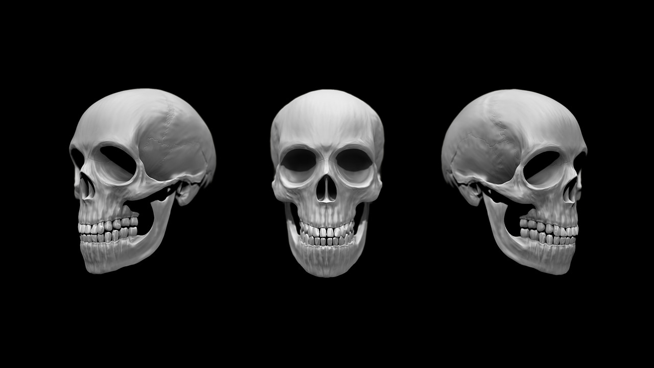 Marc virgili skull views