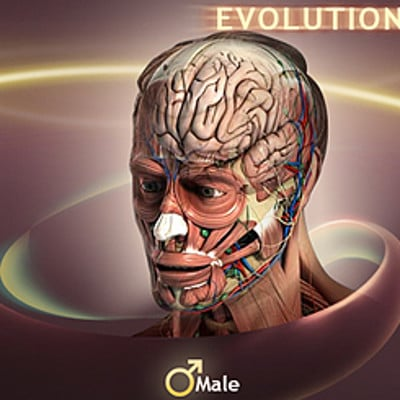 Vibhas virwani 3d renders male anatomy game art for evolutionary anatomy portfolio image by vibhas virwani
