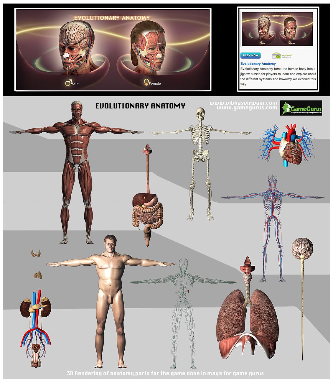 ArtStation - 3D male human anatomy renders , vibhas virwani