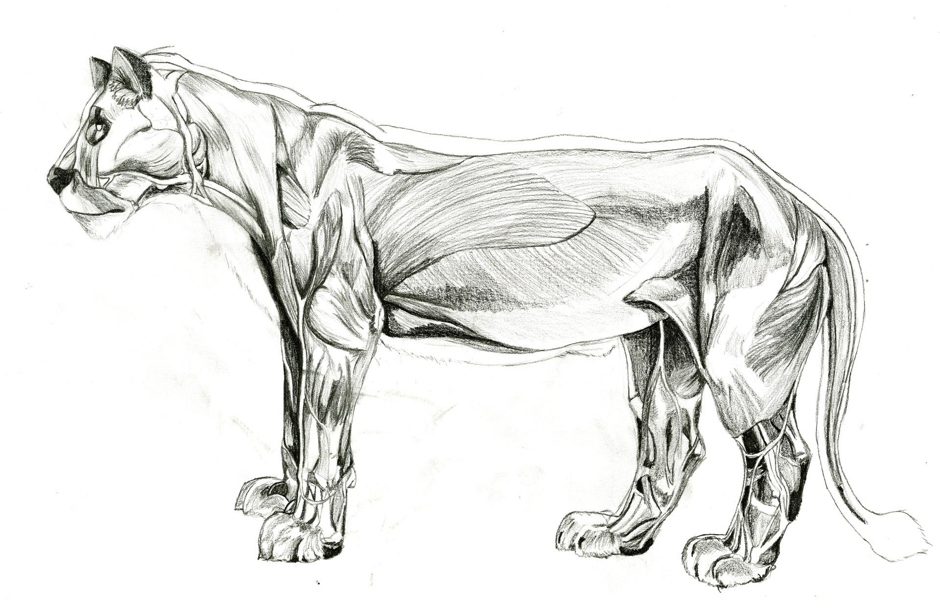 Grem Magic - Animal Anatomy