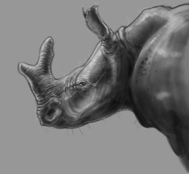 Adam milicevic rhino thing d