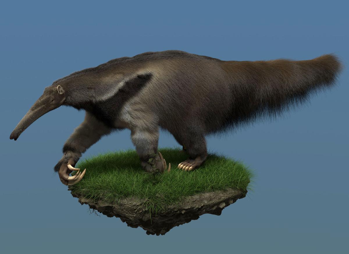 Zoltan korcsok zkorcsok anteater01 2