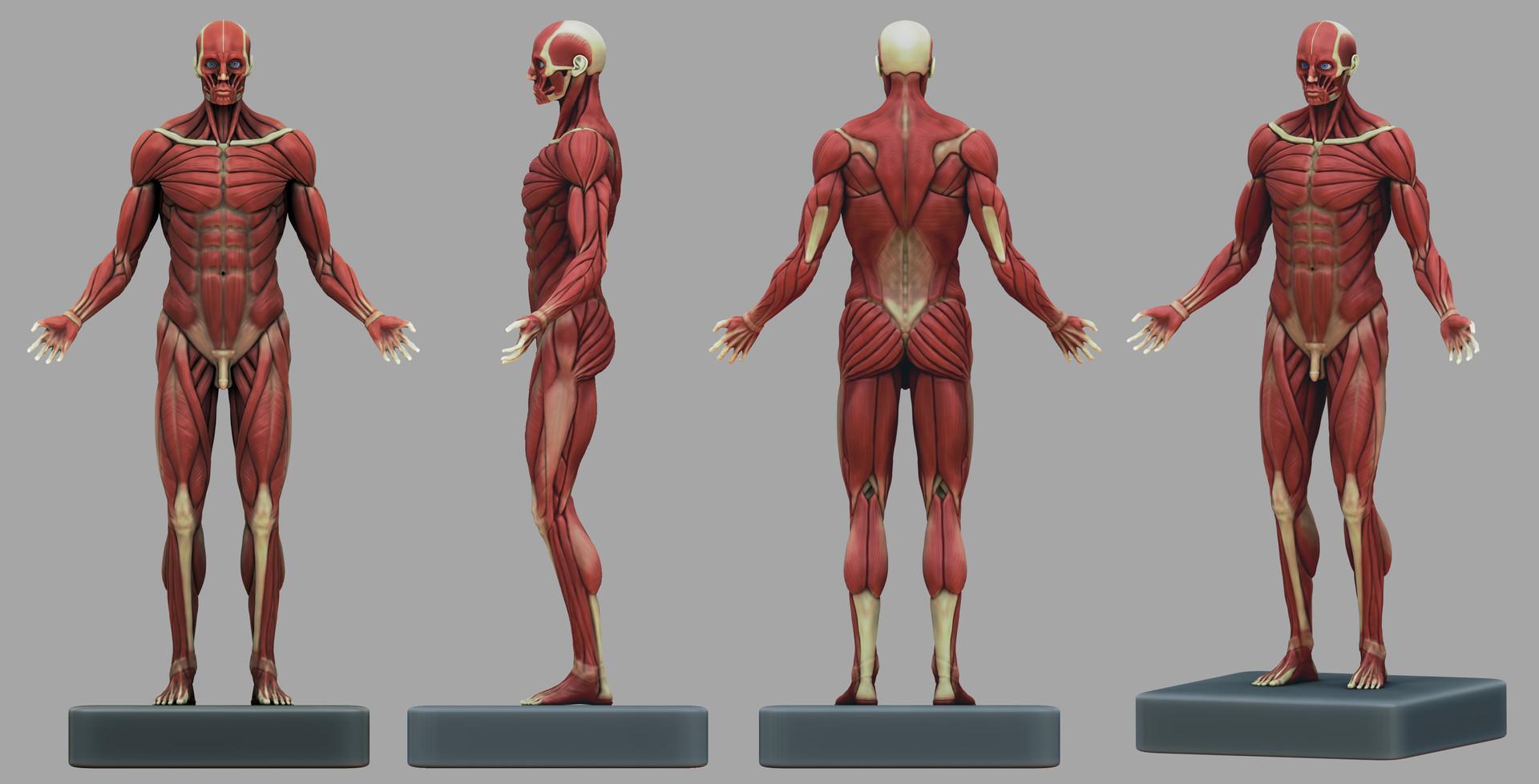 ayrwann-mary-mary-ayrwann-zbrush-anatomy