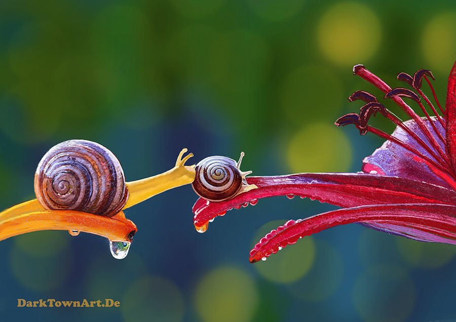 Anne pogoda another painted study of two snails with video by zombiesandwich d7ykvio