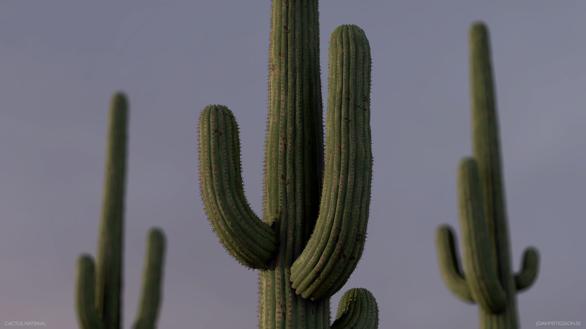 Joakim stigsson cactus 01 model