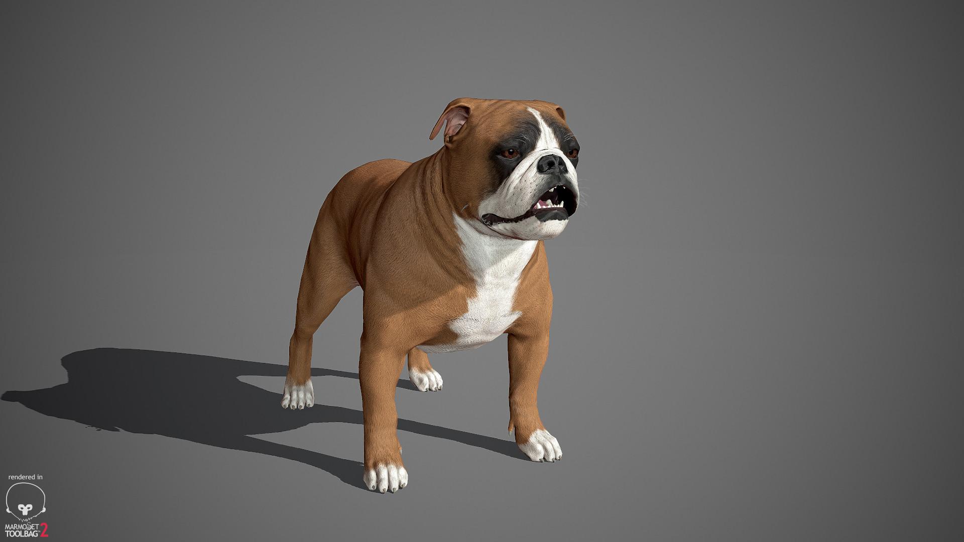Alex lashko englishbulldog by alexlashko marmoset 24