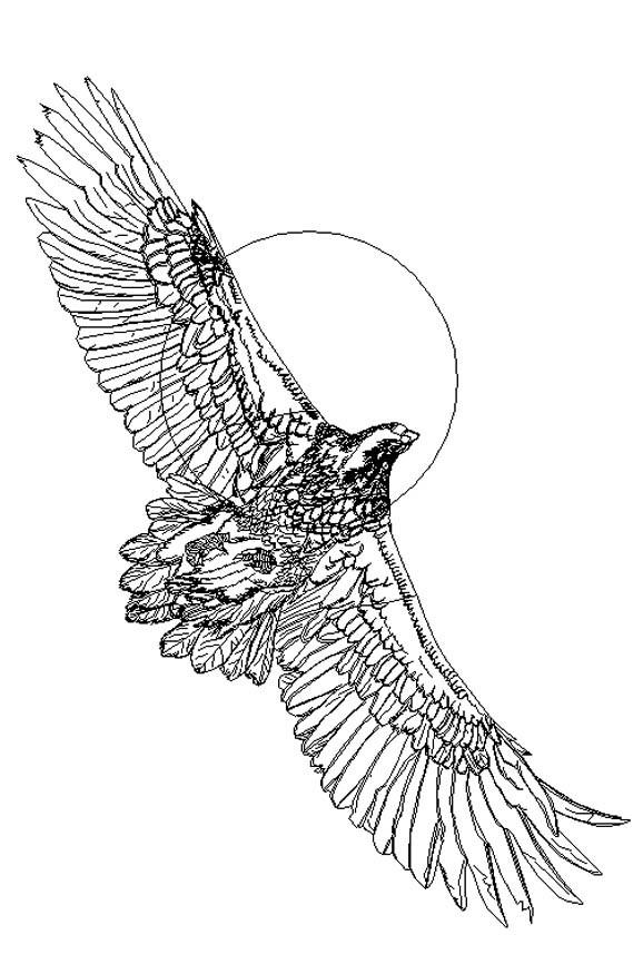 Rajesh sawant eagle wireframe
