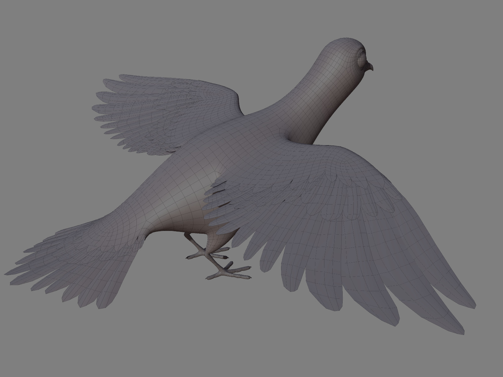 Olivier couston dove02