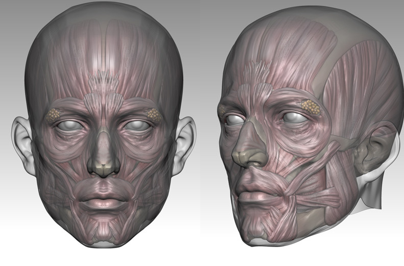 ArtStation - Face Anatomy, Hyunseok Jin