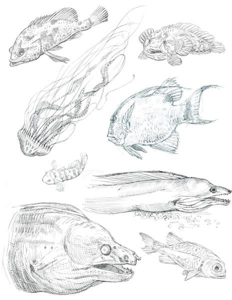 Caleb prochnow sketch17