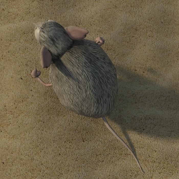 Petar doychev mouse 5