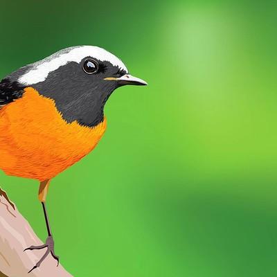 Rajesh sawant bird