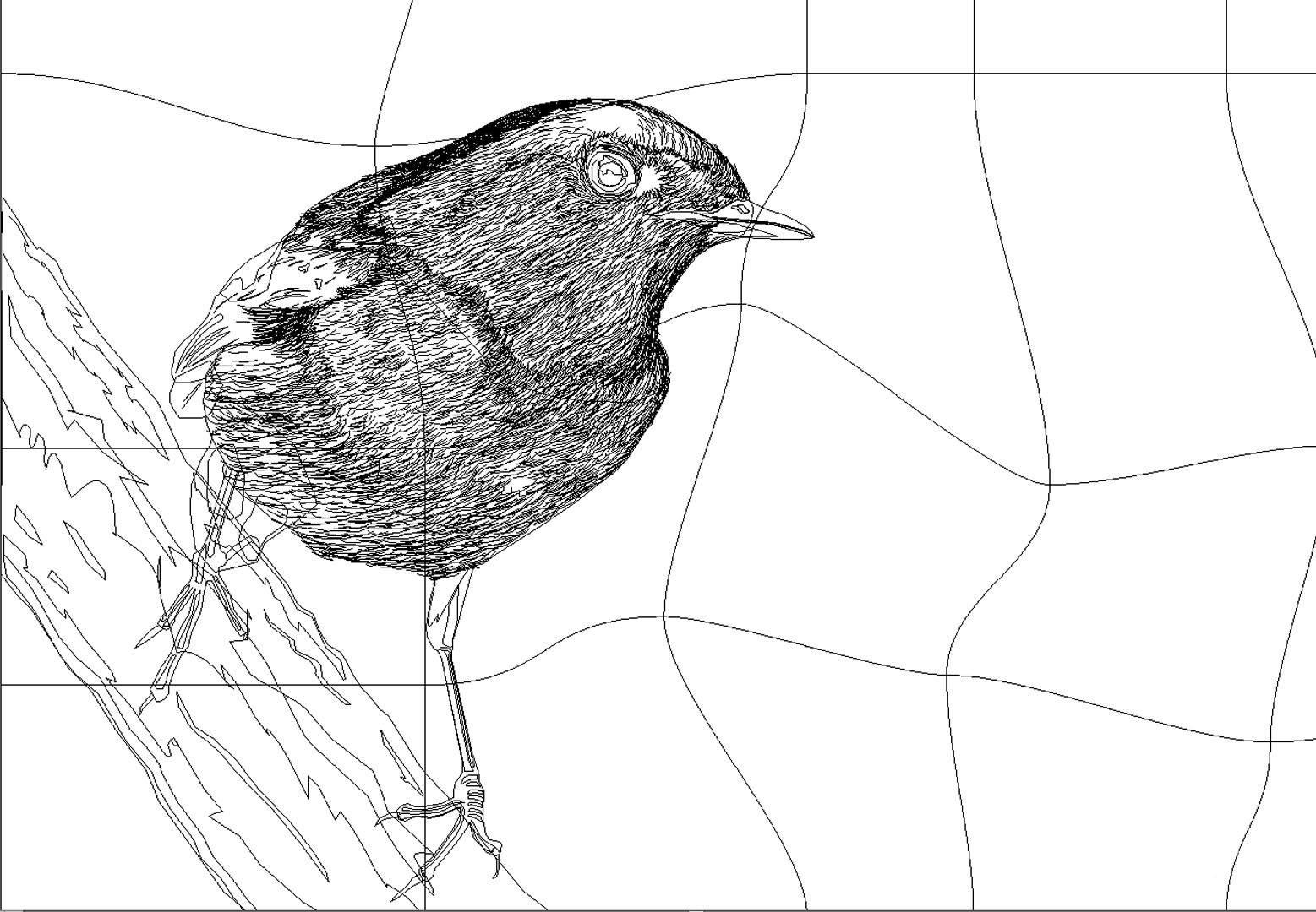 Rajesh sawant bird 4