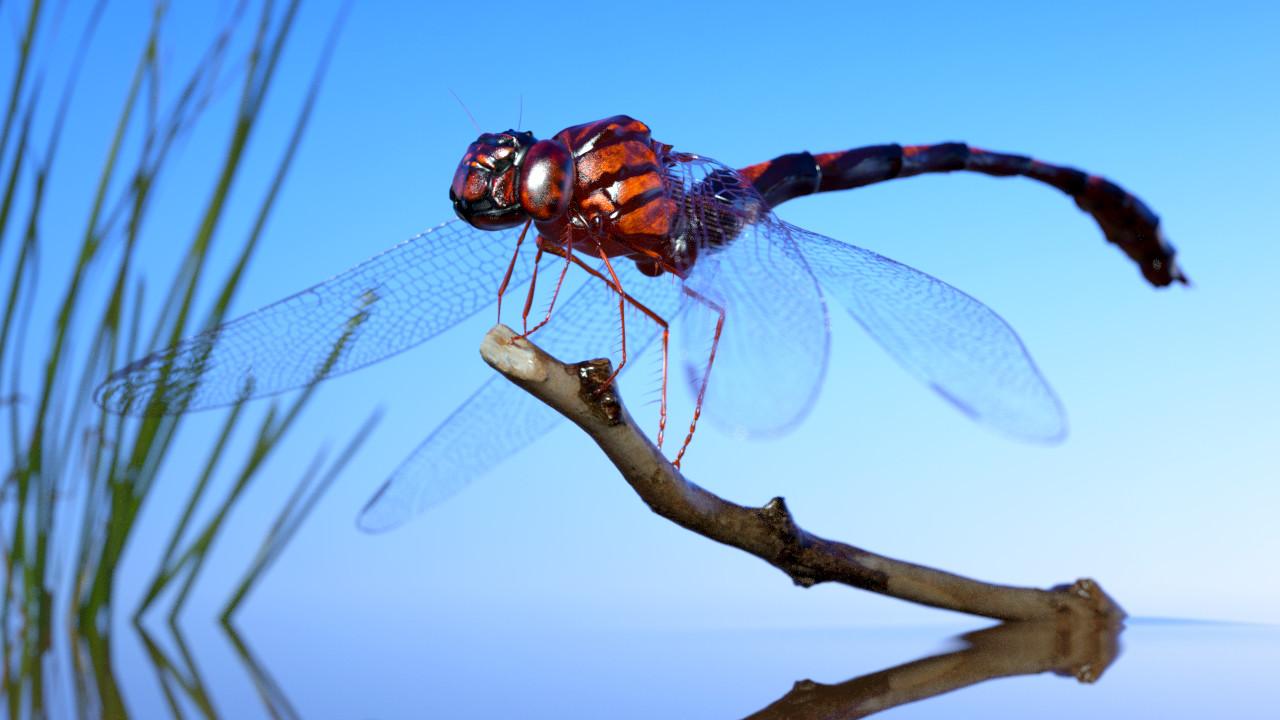 Eric keller dragonfly testrender 02