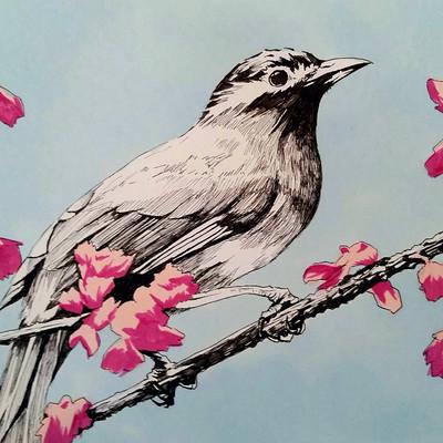 Nae phillips bird1