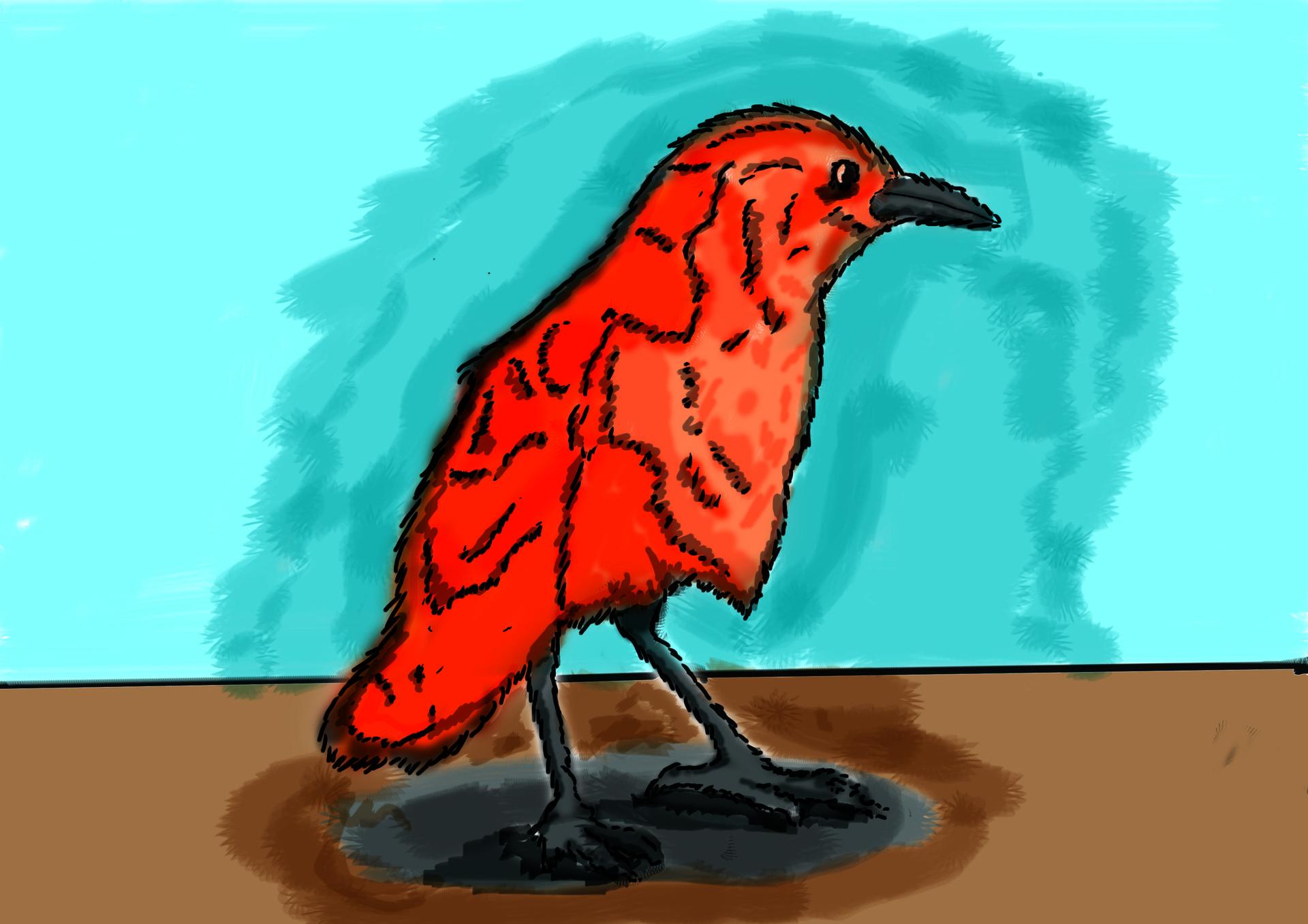 Farhan zainuddin burung