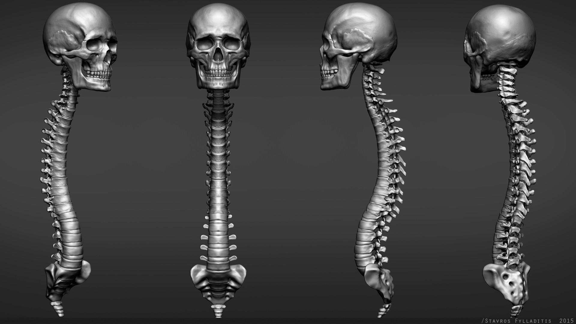 Stavros fylladitis spine v01