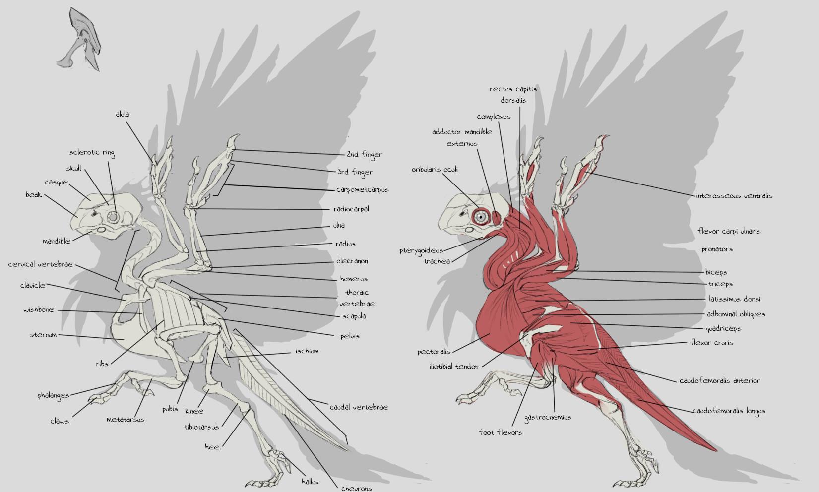 ArtStation - Avian/Theropod Studies, Sam Santala