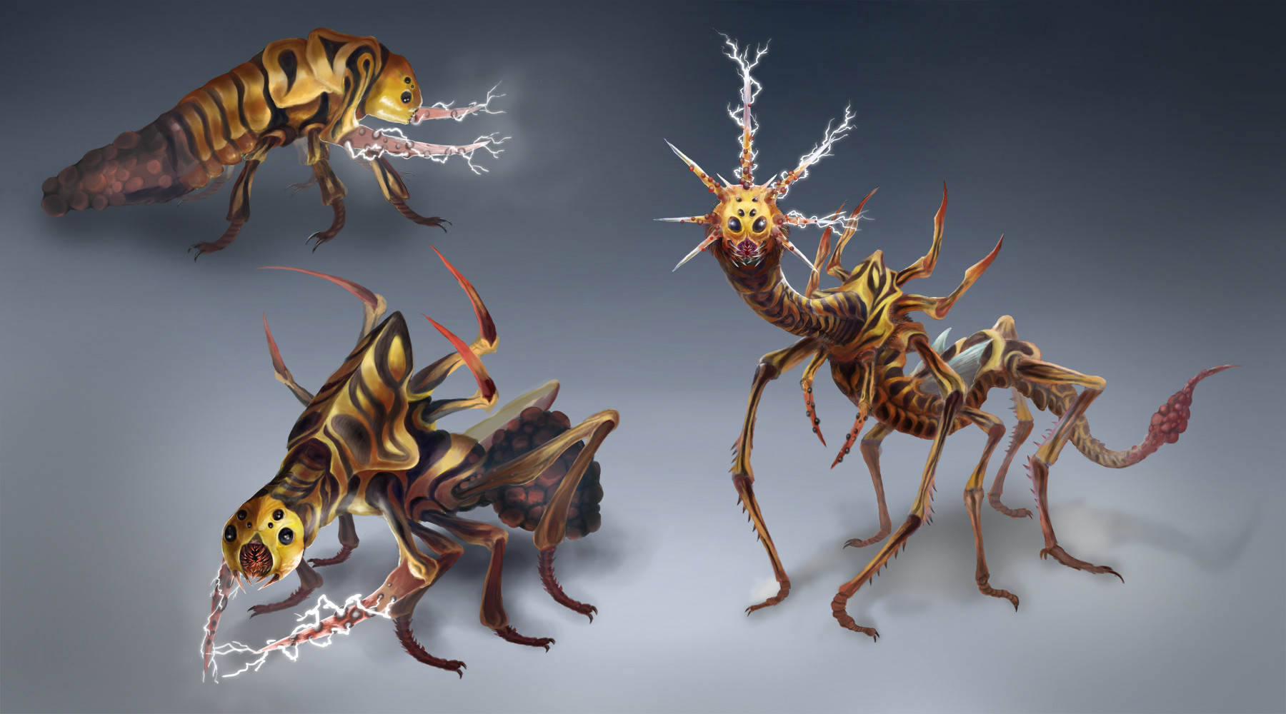 Orm irian thunder bug life cycle by catharina wendland