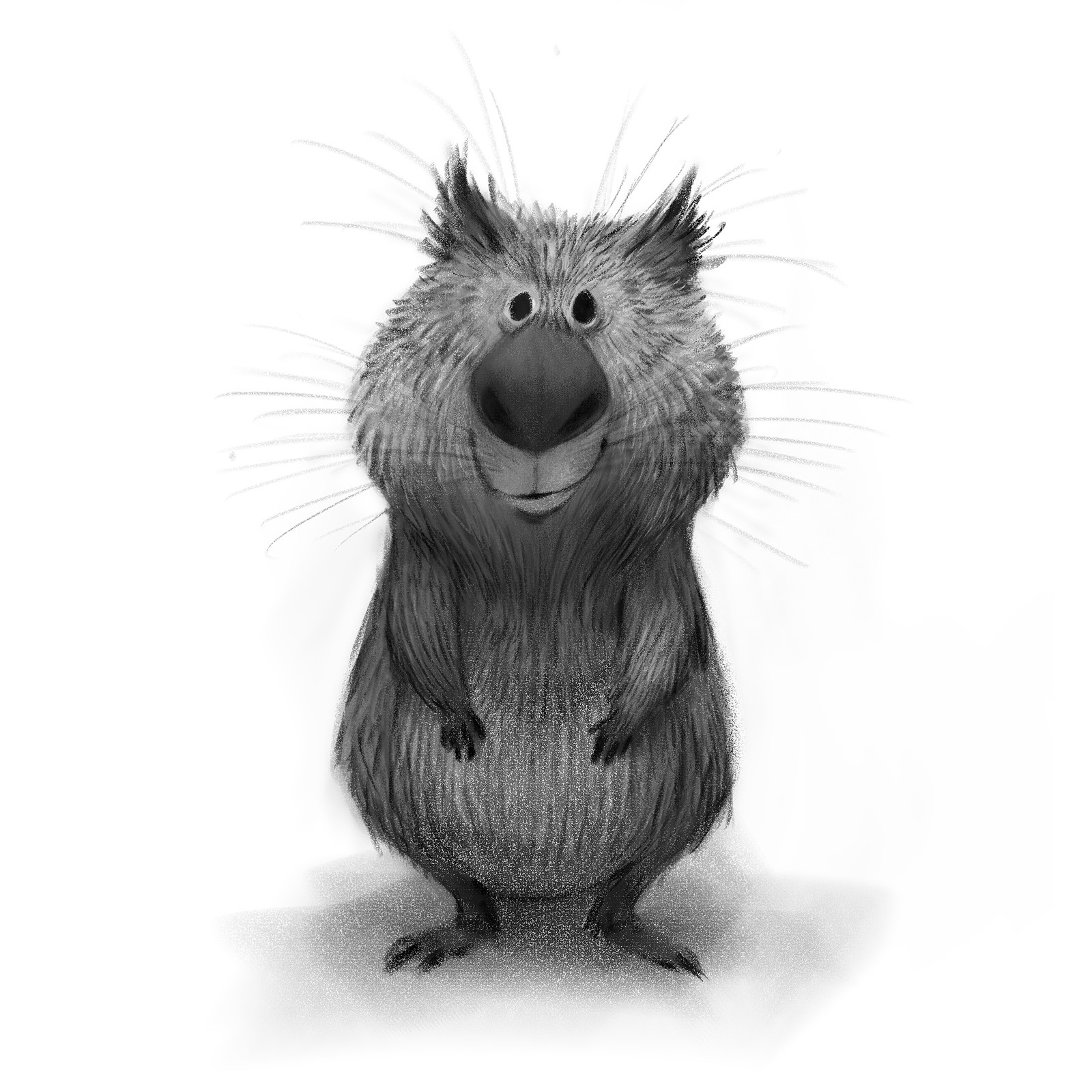 Wombat Sketch