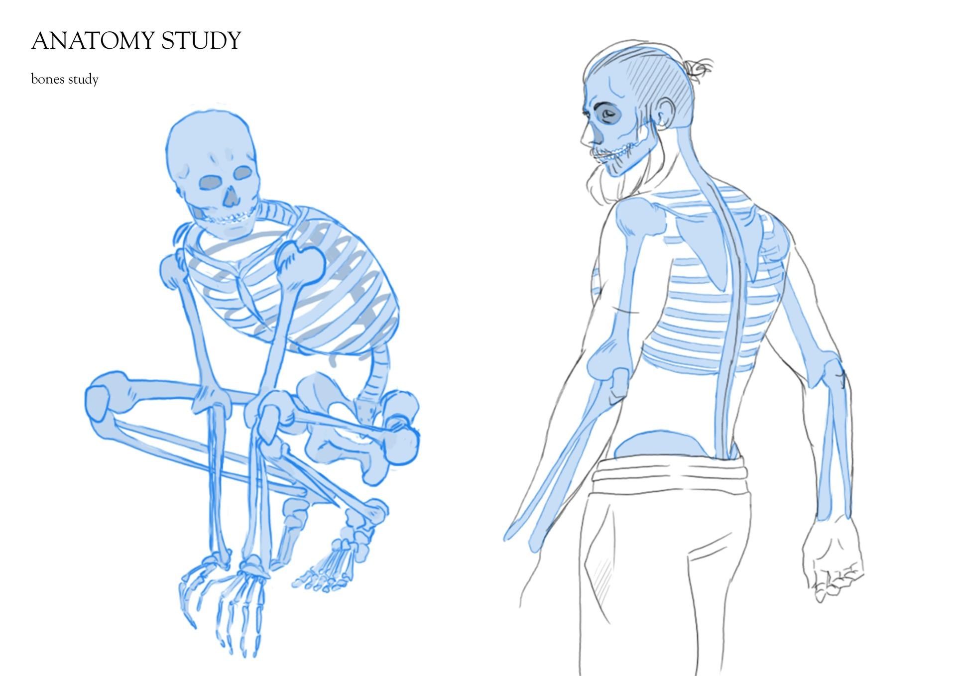 Cecile Duvernay Anatomy Study