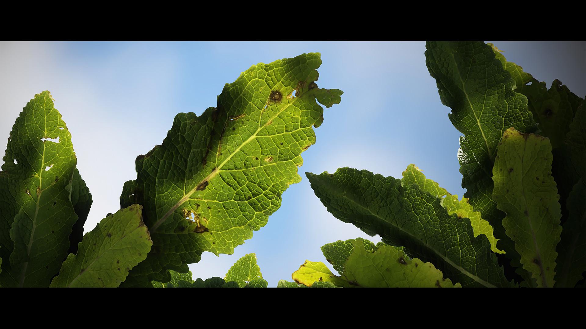 Joe garth plant sky