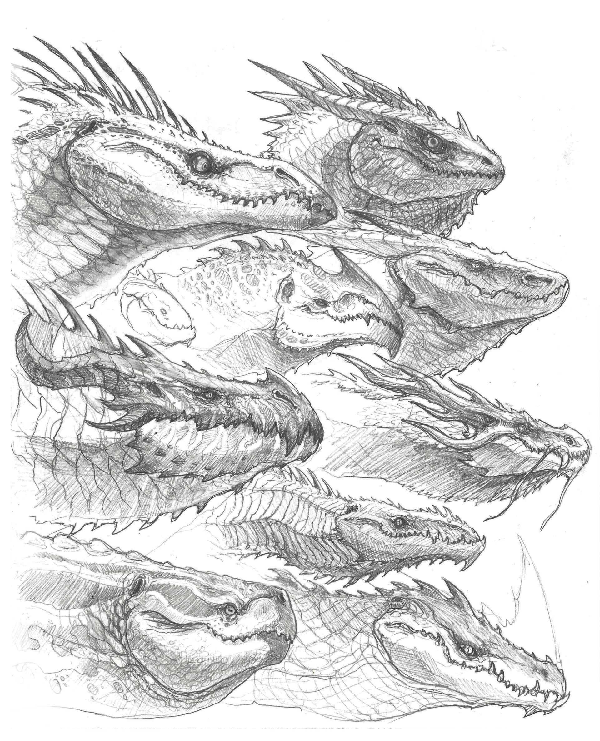 john tedrick dragon head sketches