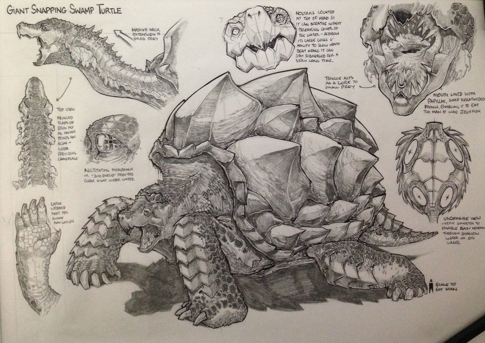 Tudor morris turtle schematic