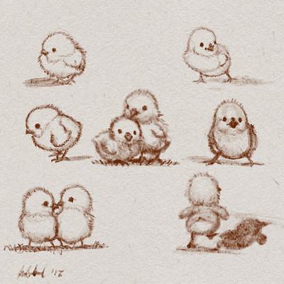 Okan bulbul chicks uplox