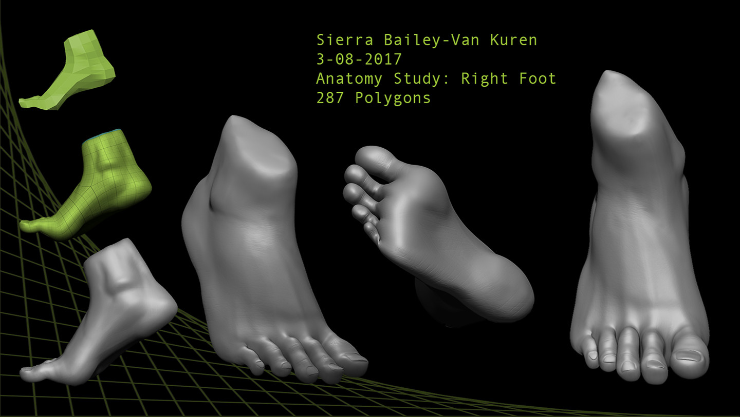 ArtStation - Anatomy Study: Right Foot, Sierra Bailey-Van Kuren