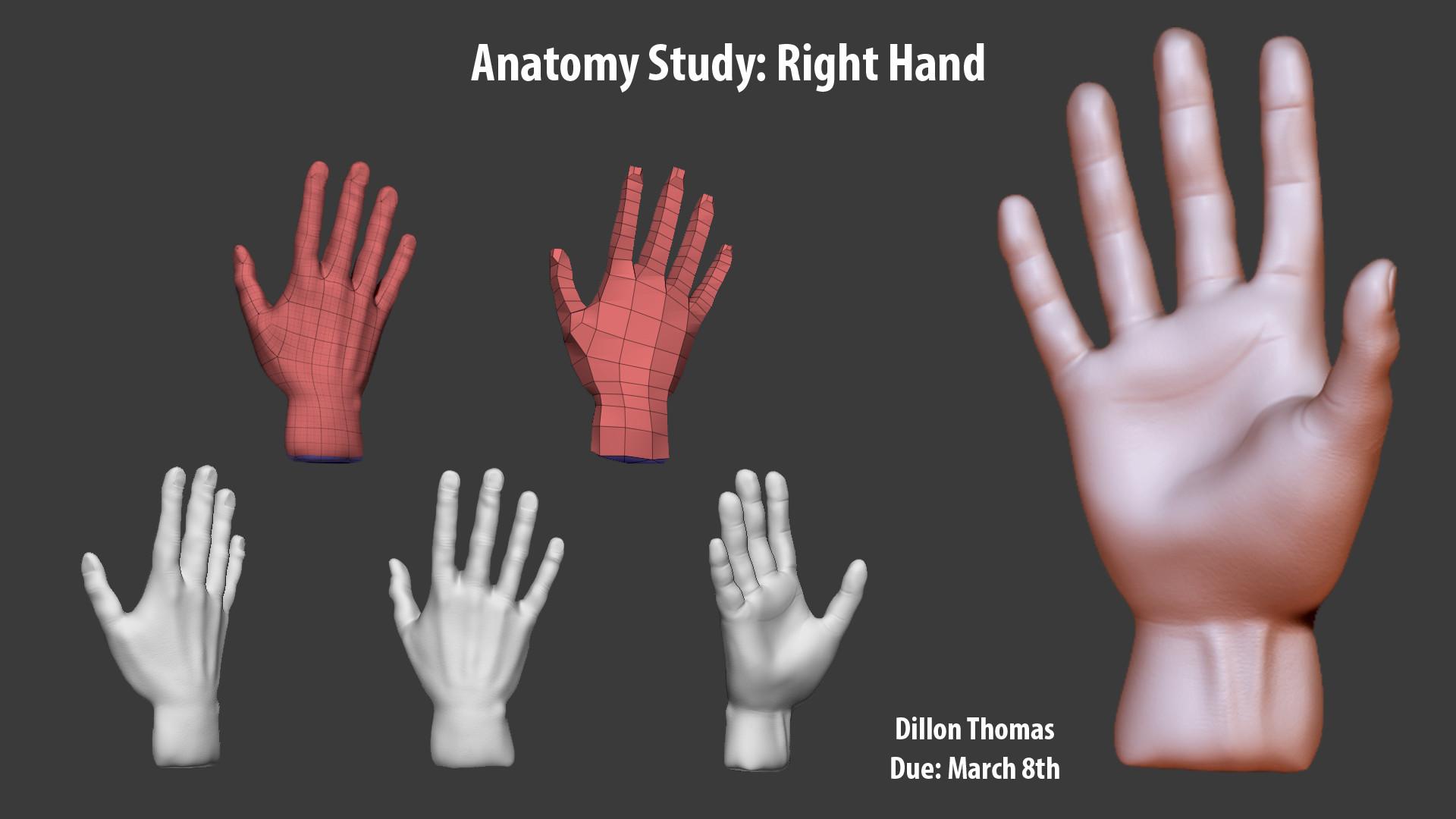 Dillon Thomas - Anatomy Study: Right Hand