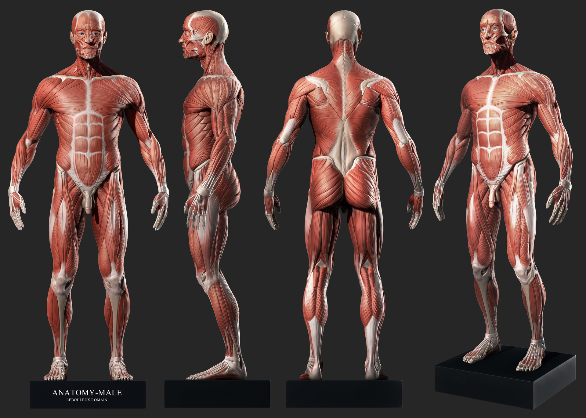 Modern Human Anatomy 3d Software Ideas - Anatomy and Physiology ...