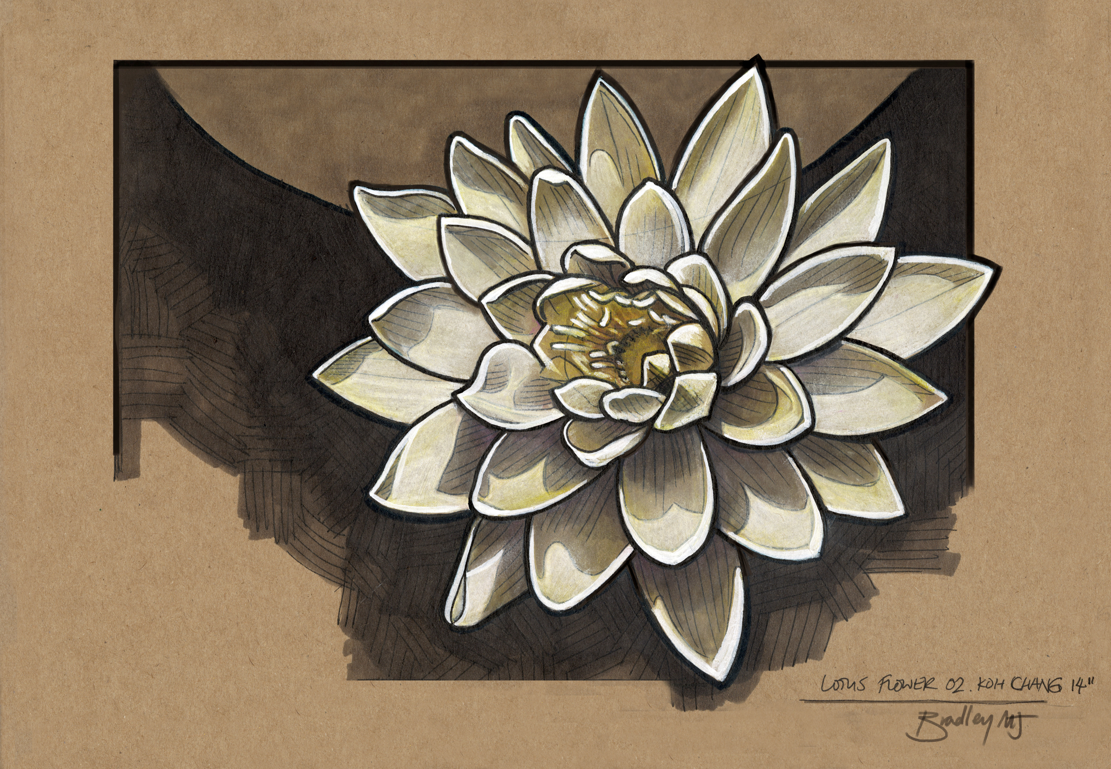 Lotus Flower Study from life, finished in studio