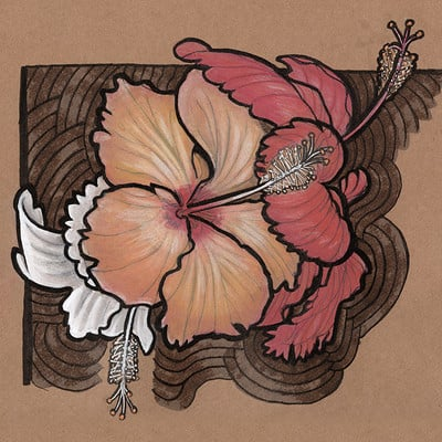 Bradley morgan johnson hibiscus