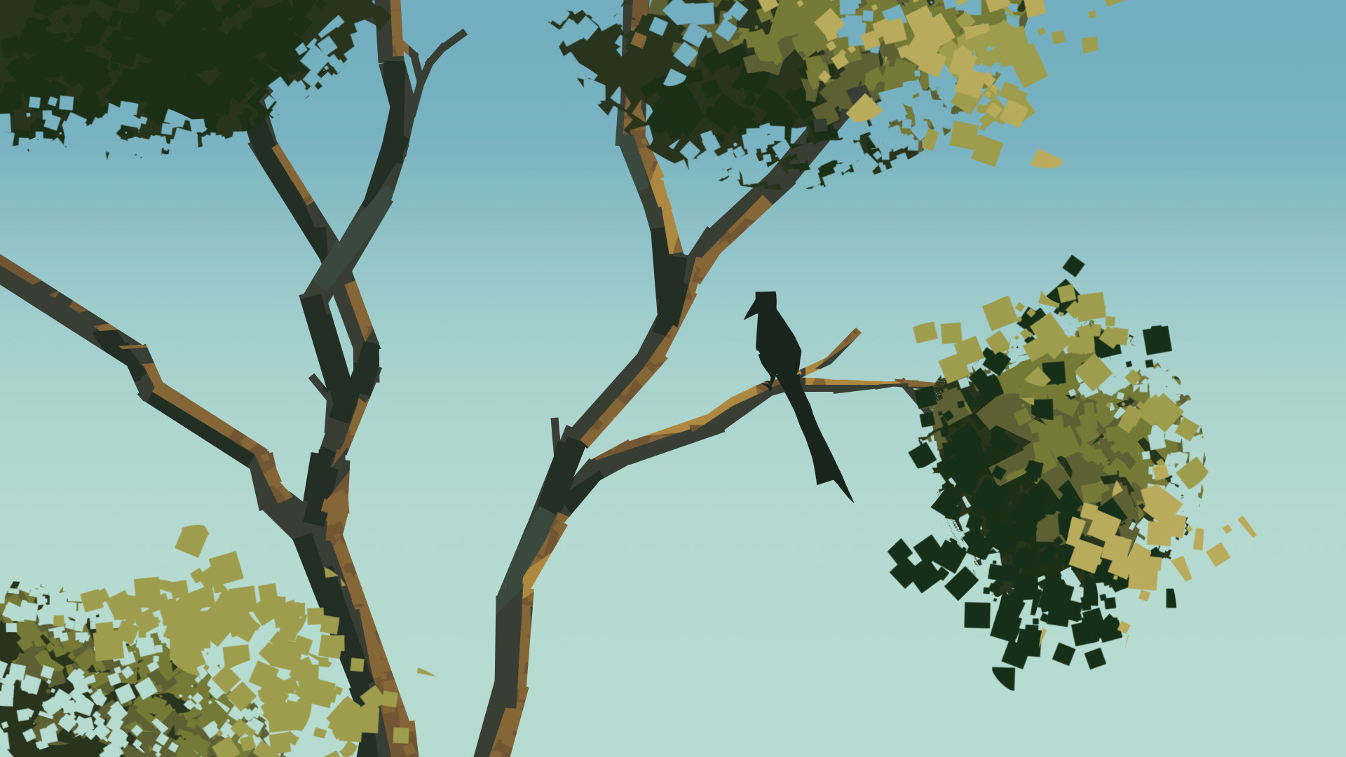 Harrison yinfaowei crested drongo in tamarind tree