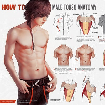 Valentina remenar how to male torso anatomy by valentina remenar
