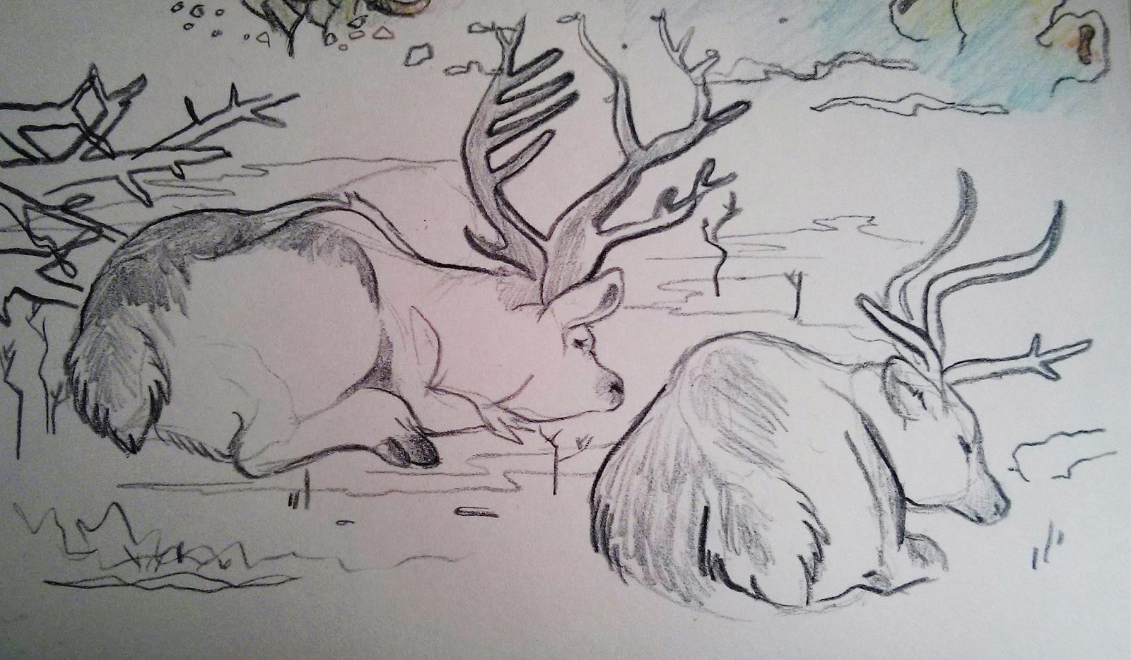 Kaylie benner 3 caribou