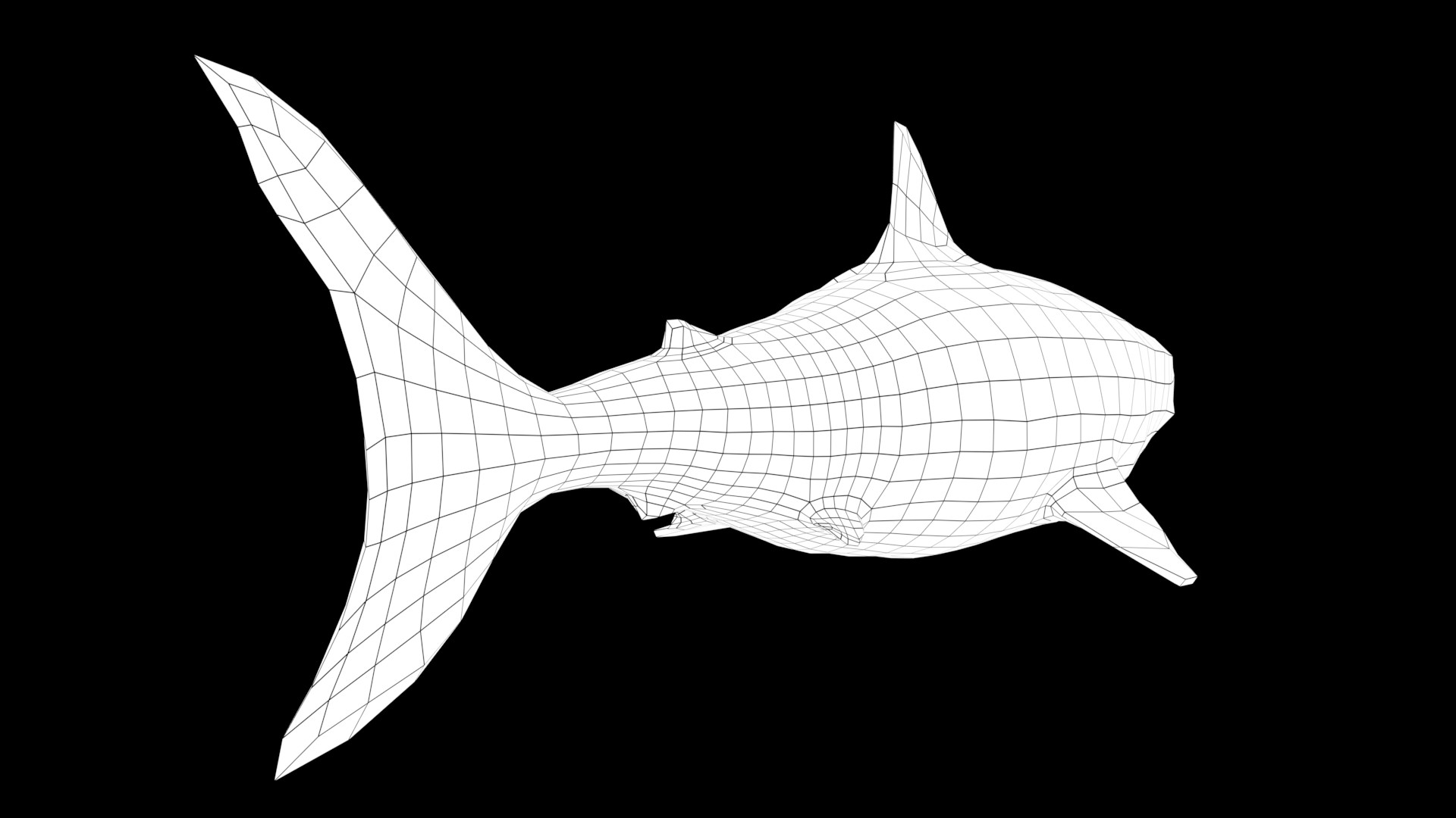 Oliver hopley sharkw 003