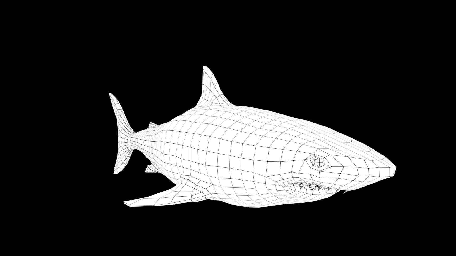 Oliver hopley sharkw 002