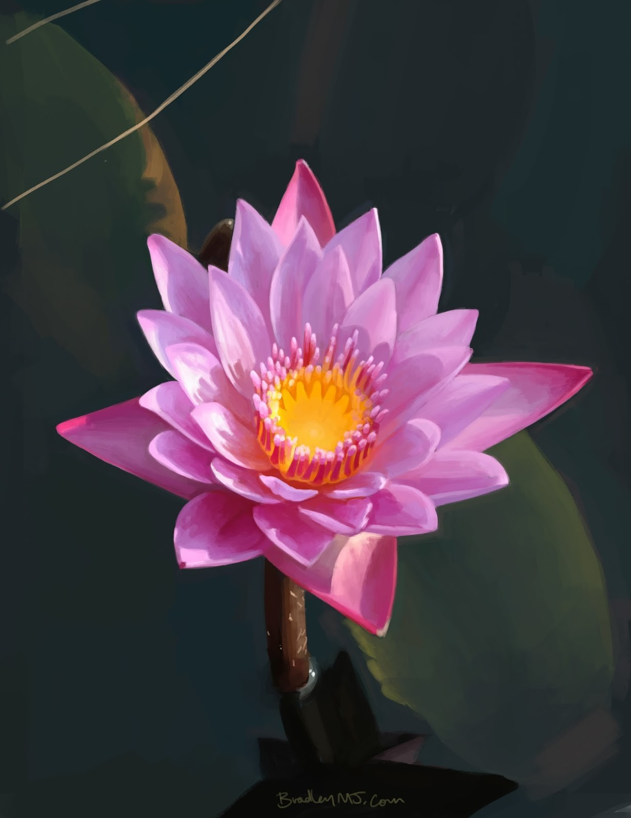 Lotus flower study