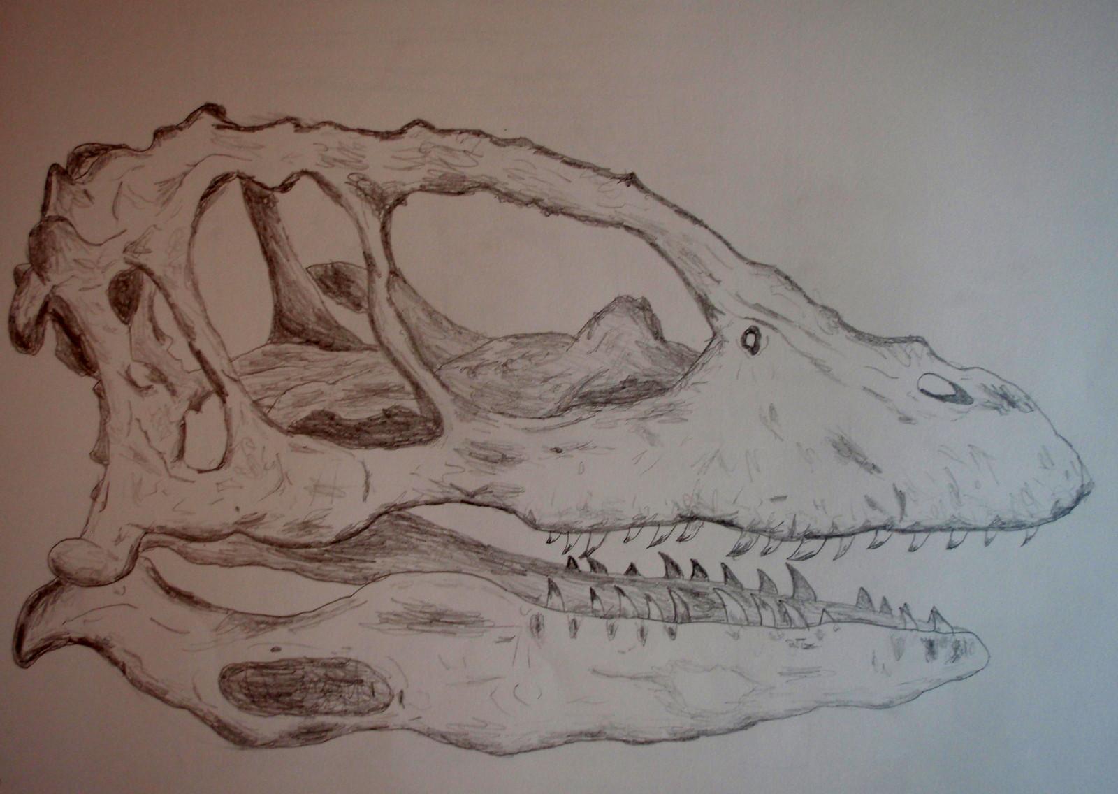 Raptor Skull Replica