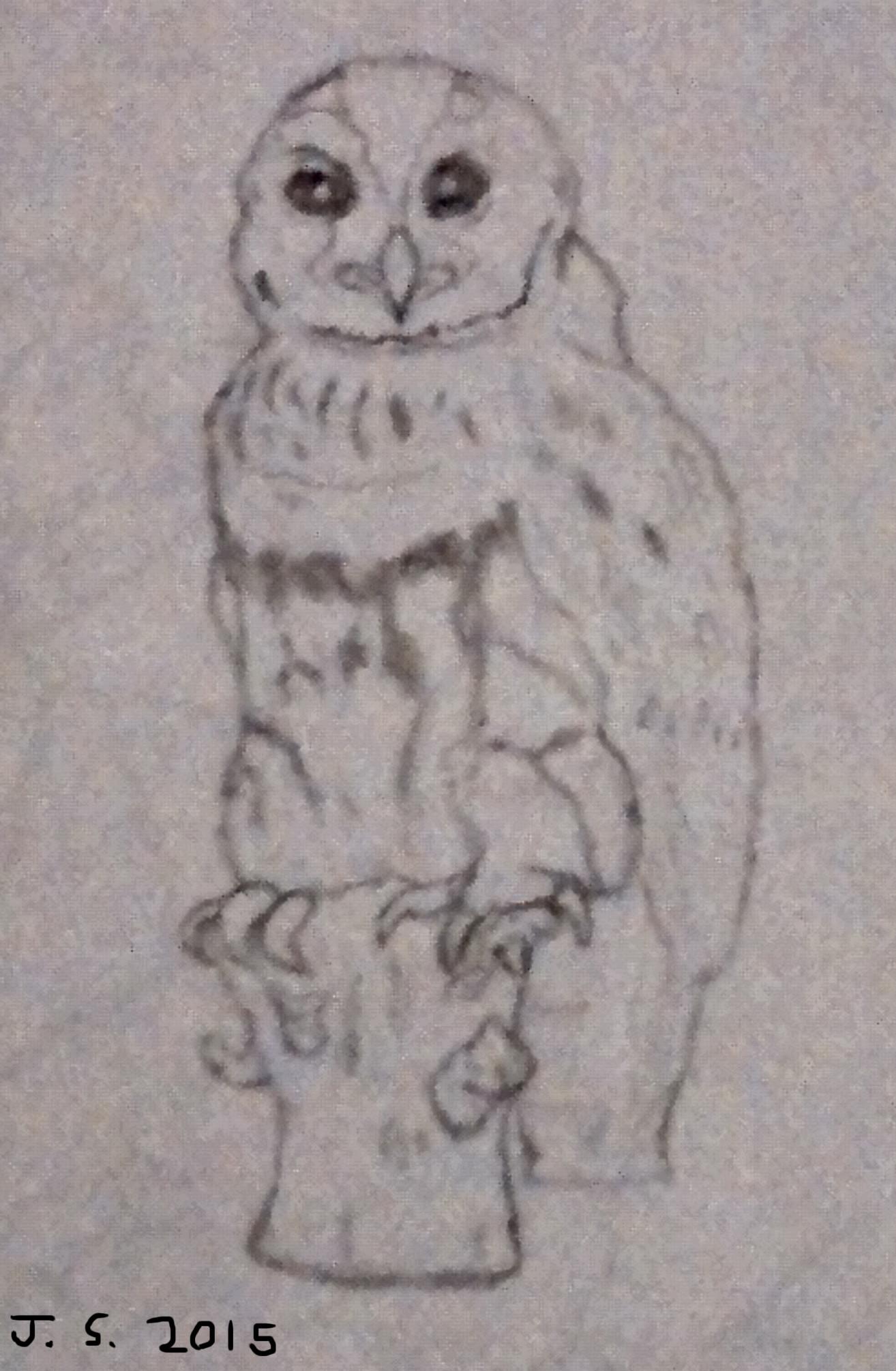 James skinner owl1