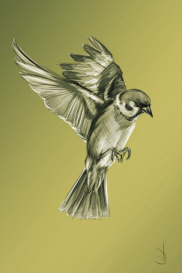 Wojtek depczynski sparrow