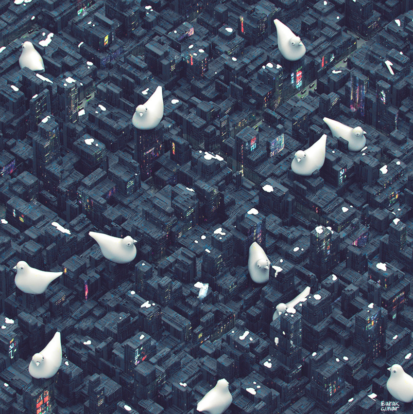 City of Birds