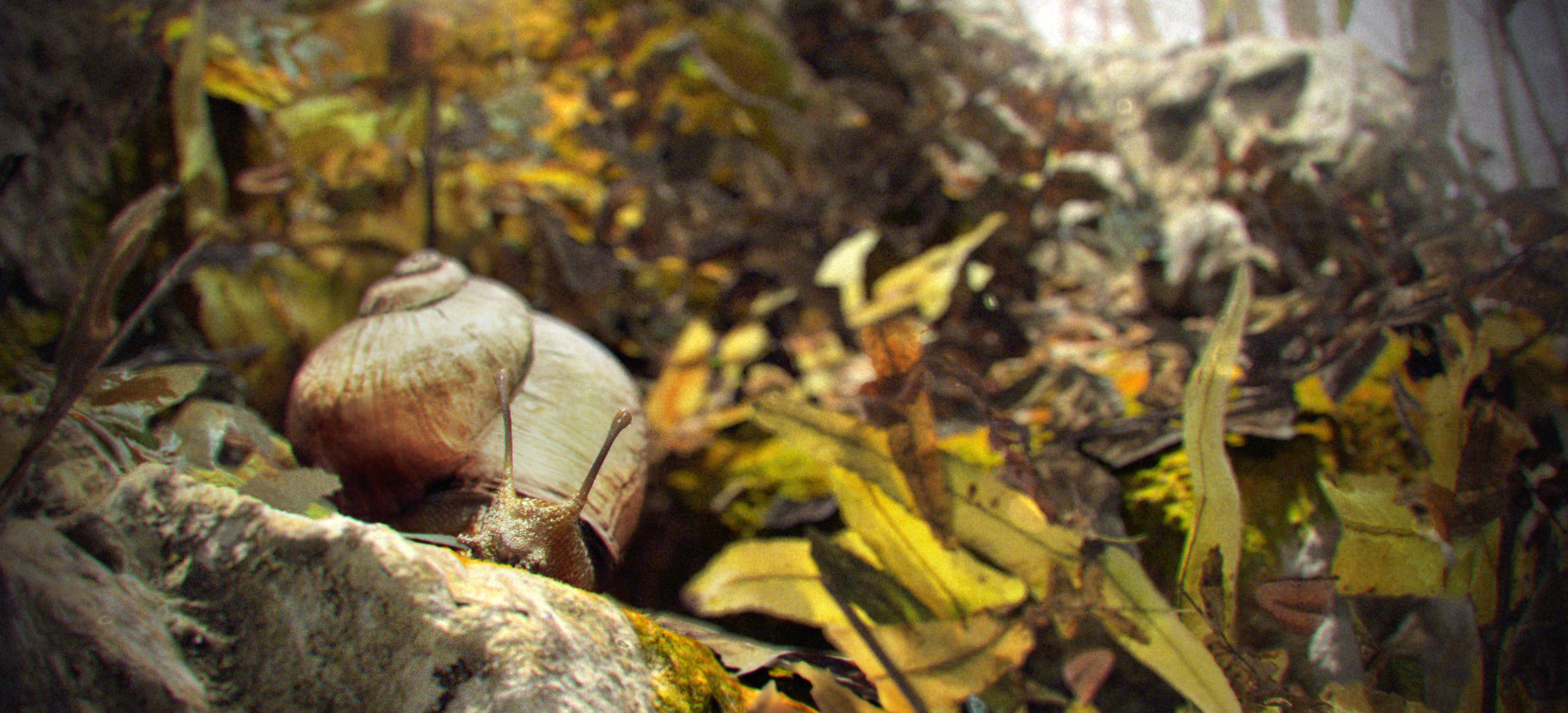 Tamas gyerman snail final v01