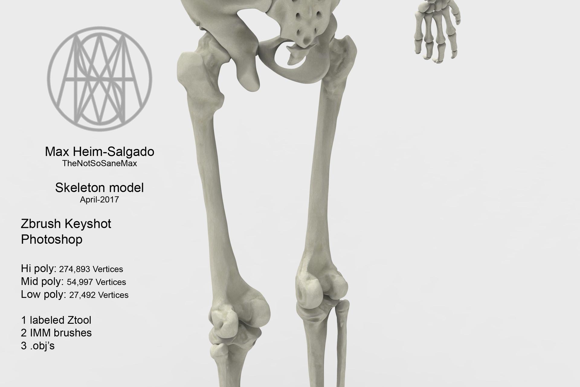 ArtStation - Human Male Skeleton , Max Heim-salgado