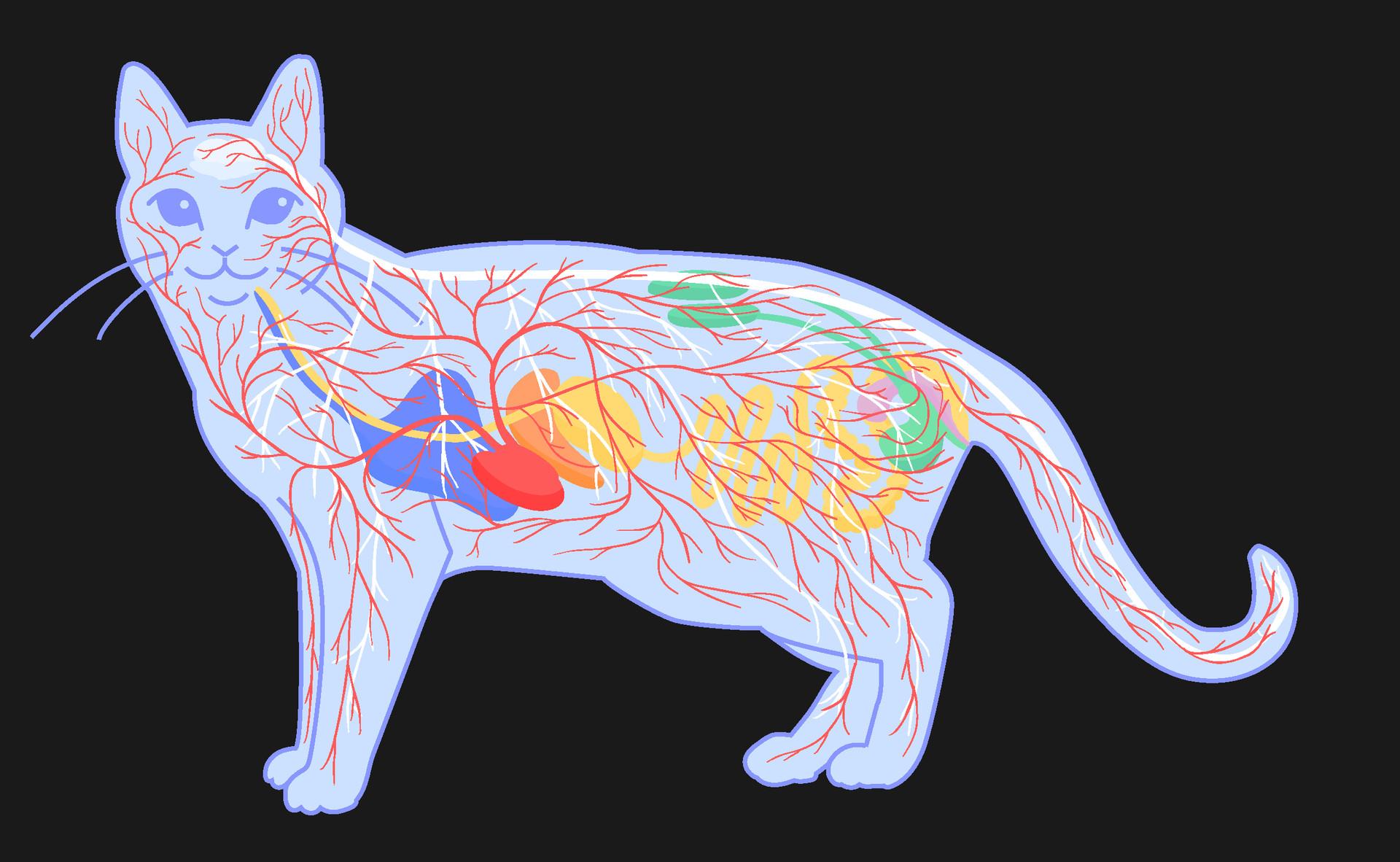 Lea Vučko - Animal anatomy