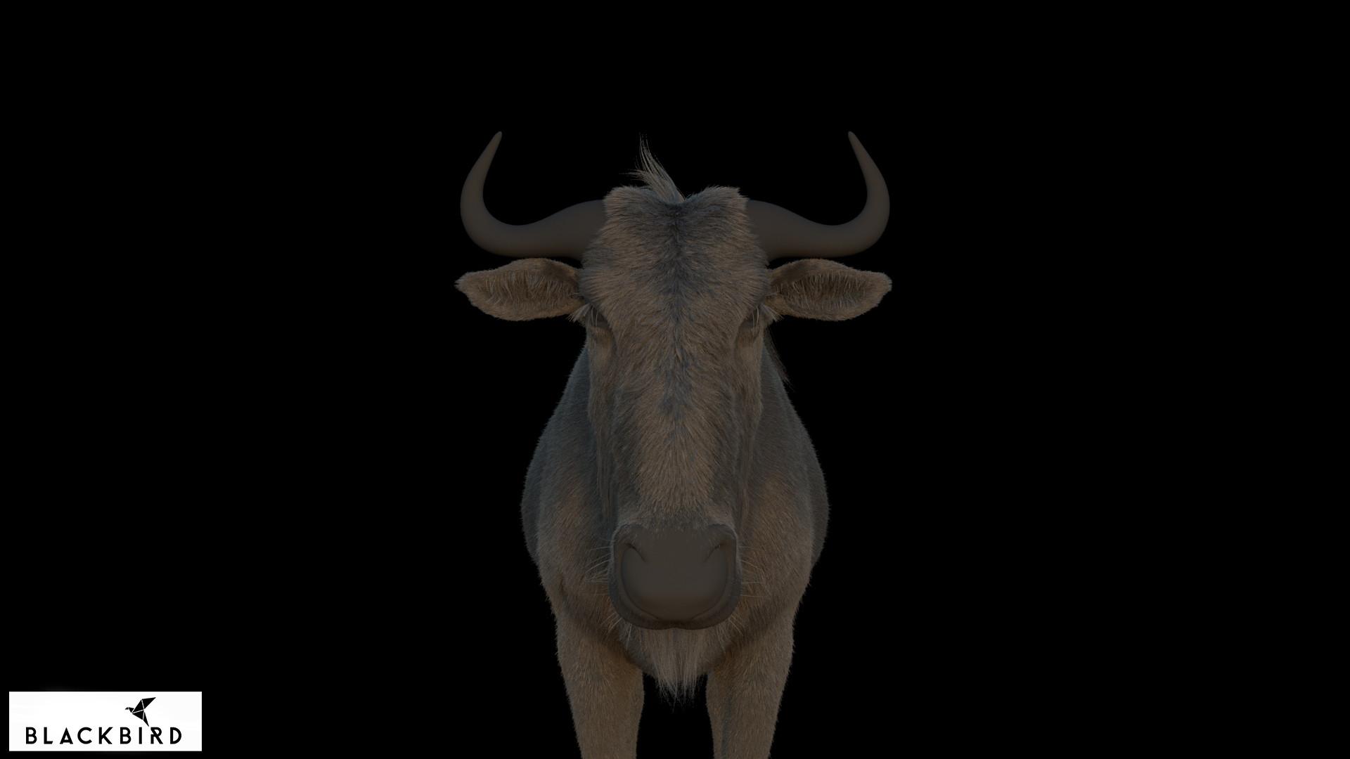 Antepost bull 01