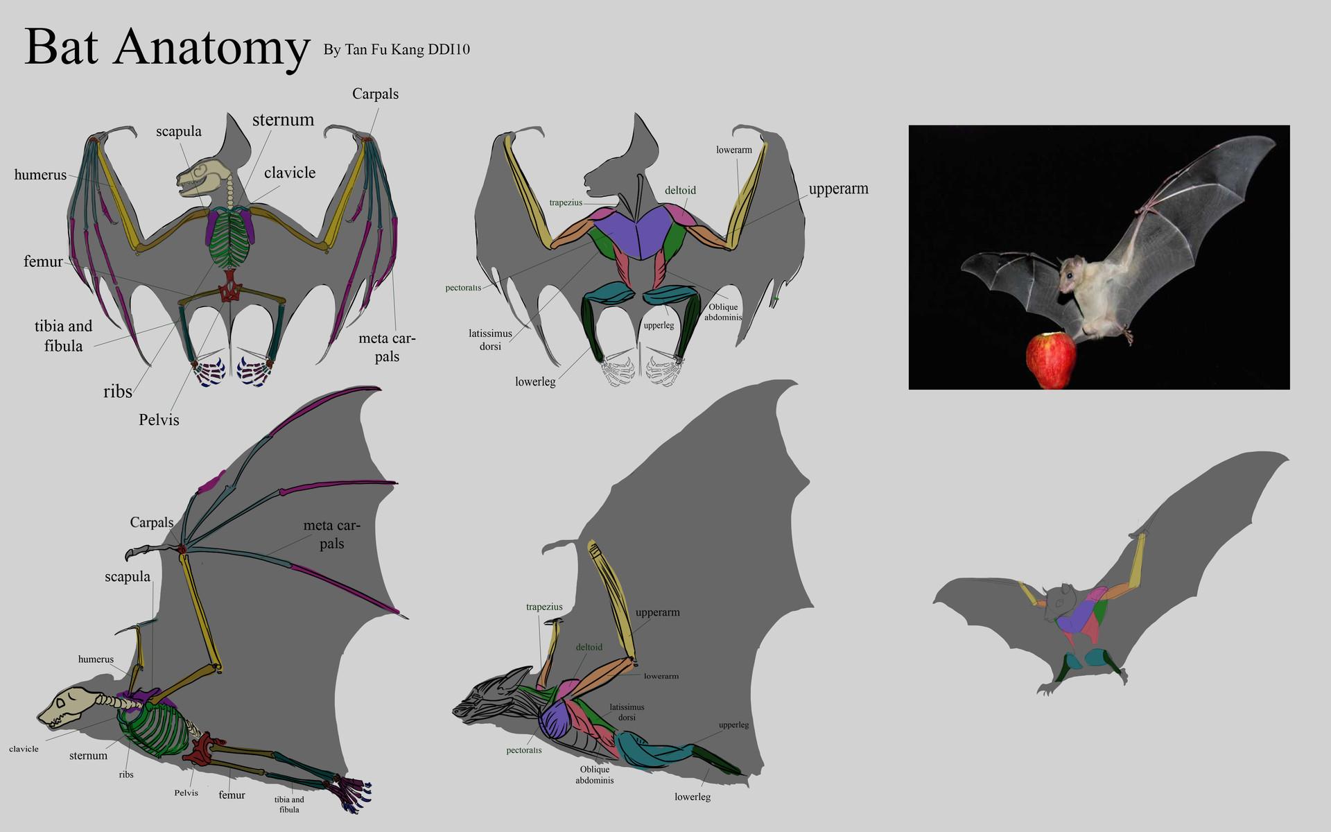 ArtStation - Creature Anatomy study, Fukang Tan