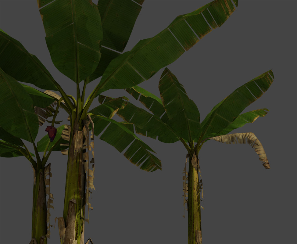 Jeremy h brown bananatreesclose01